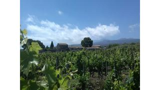 Tenuta di Fessina, the places on the Etna that fascinate wine lovers