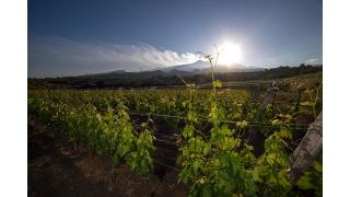 Wine Tasting Etna, a volcanic wine experience