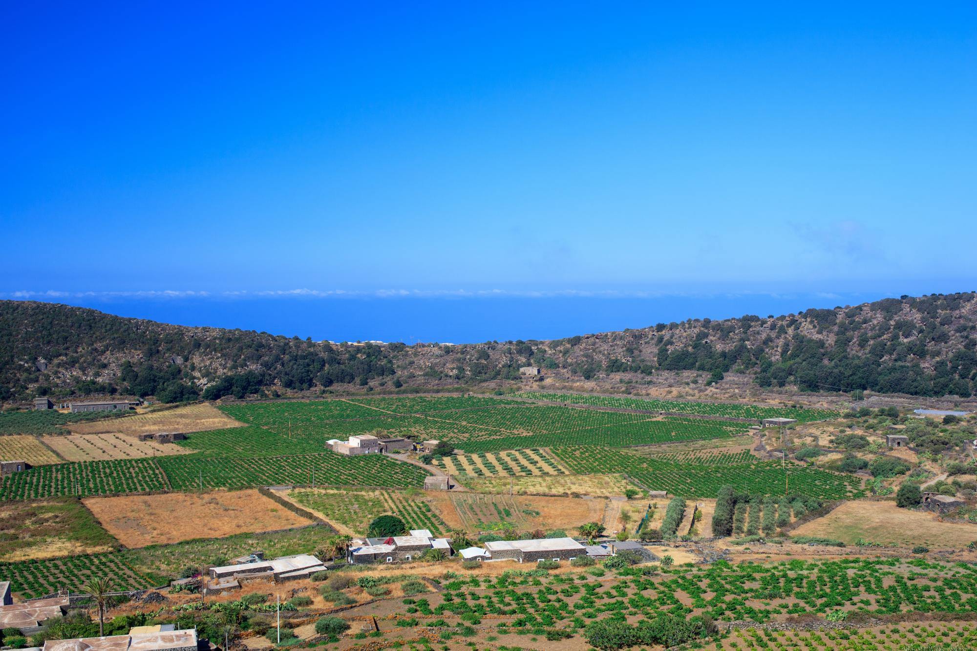 Wine territories in Sicily