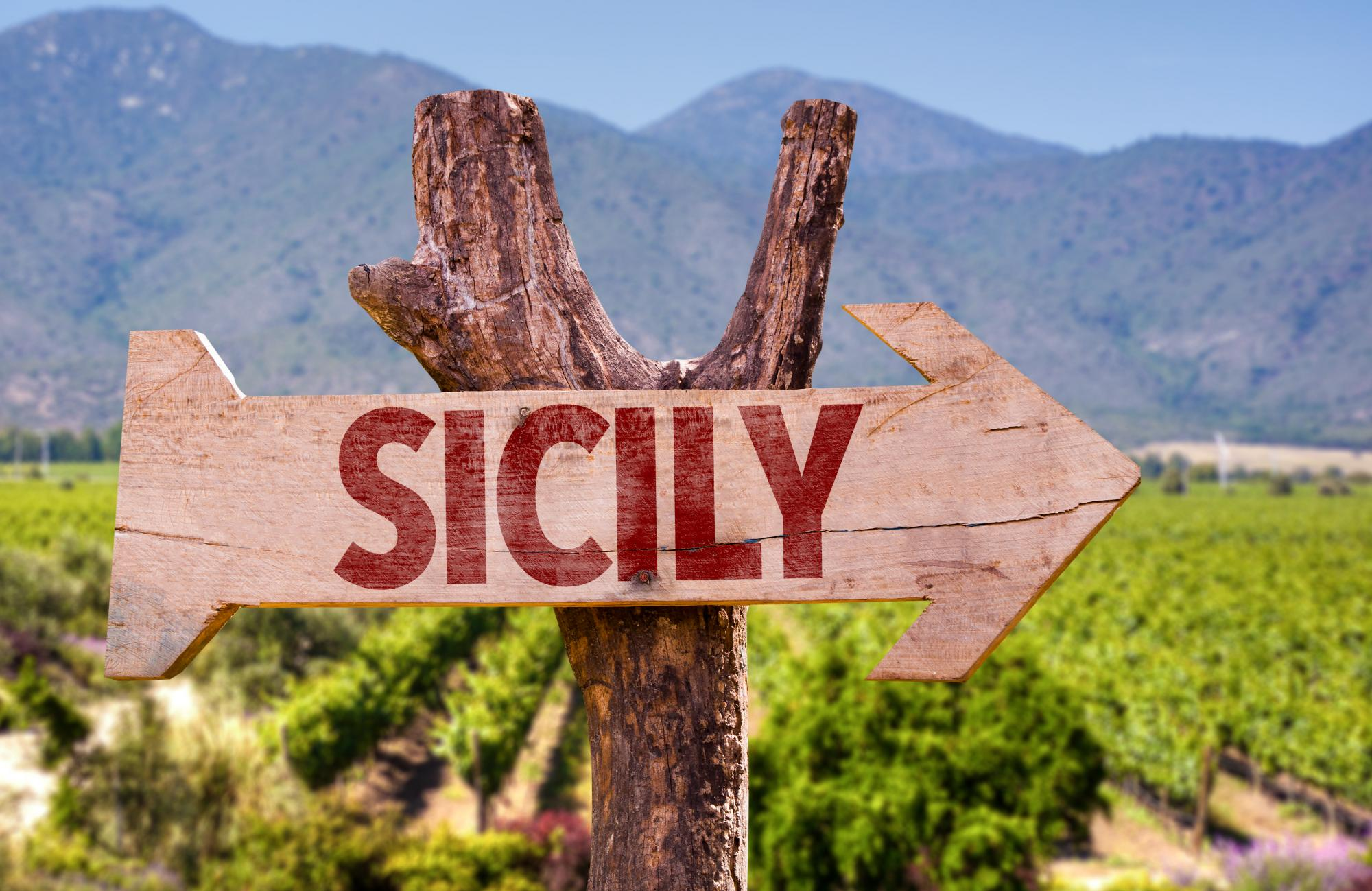 TAKE A LOOK AT THE BEST WINE OF SICILY