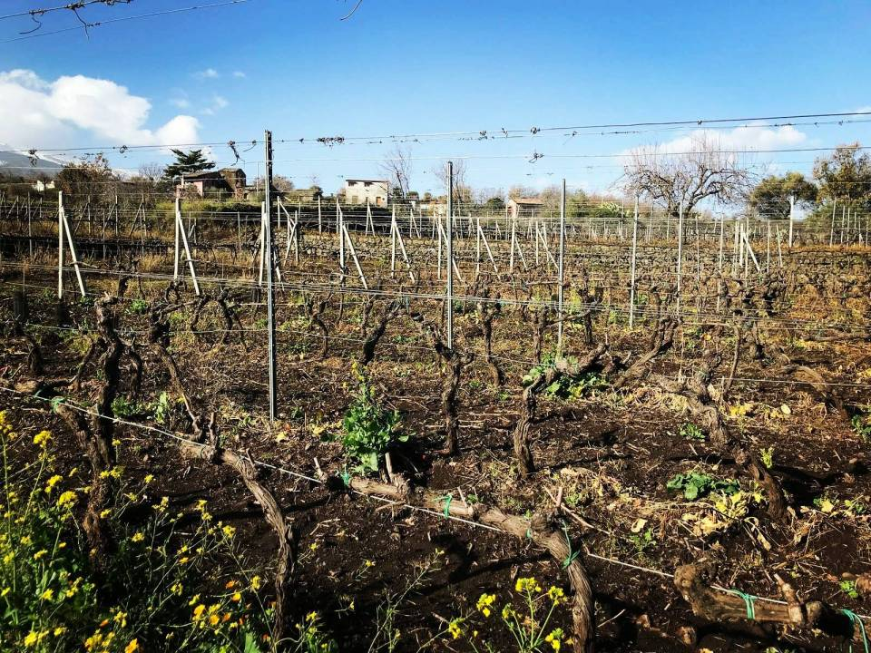 Wine Tasting and tour Viagrande - Tenute Mannino di Plachi - Le Sciarelle Farm 7