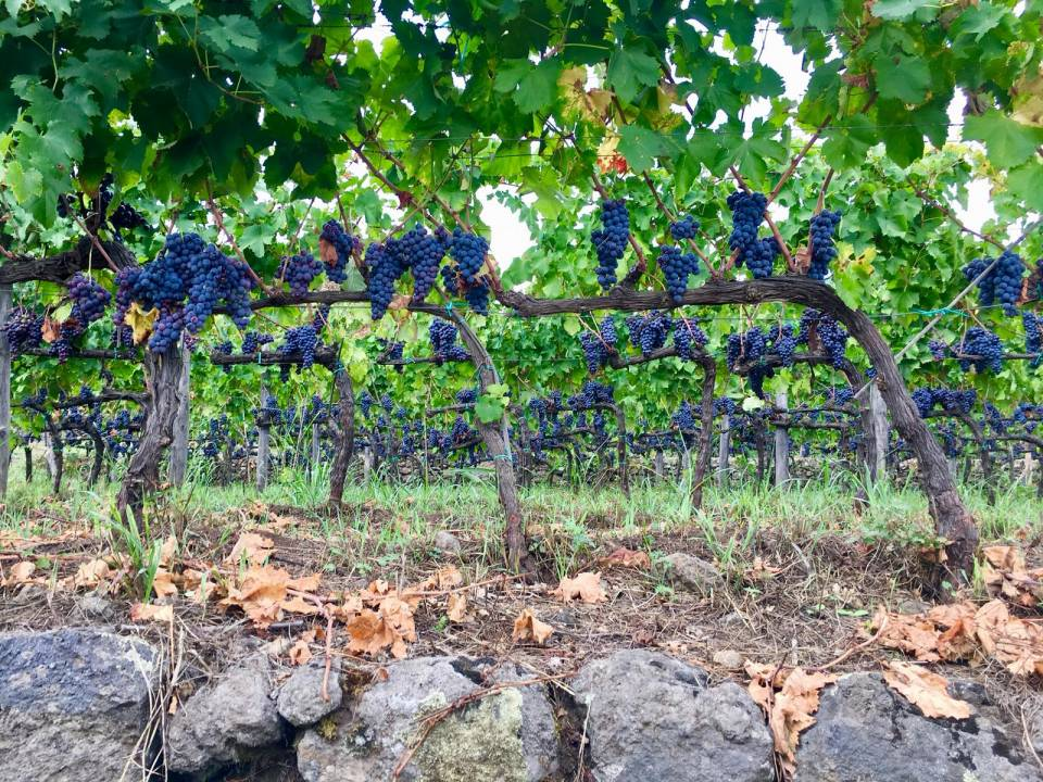 Discovering ETNA Wine Tour Tasting - Cantine Valenti 2