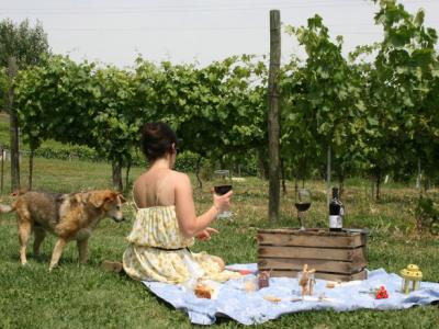 PICNIC IN THE WINERY Tasting - Tenuta Bastonaca