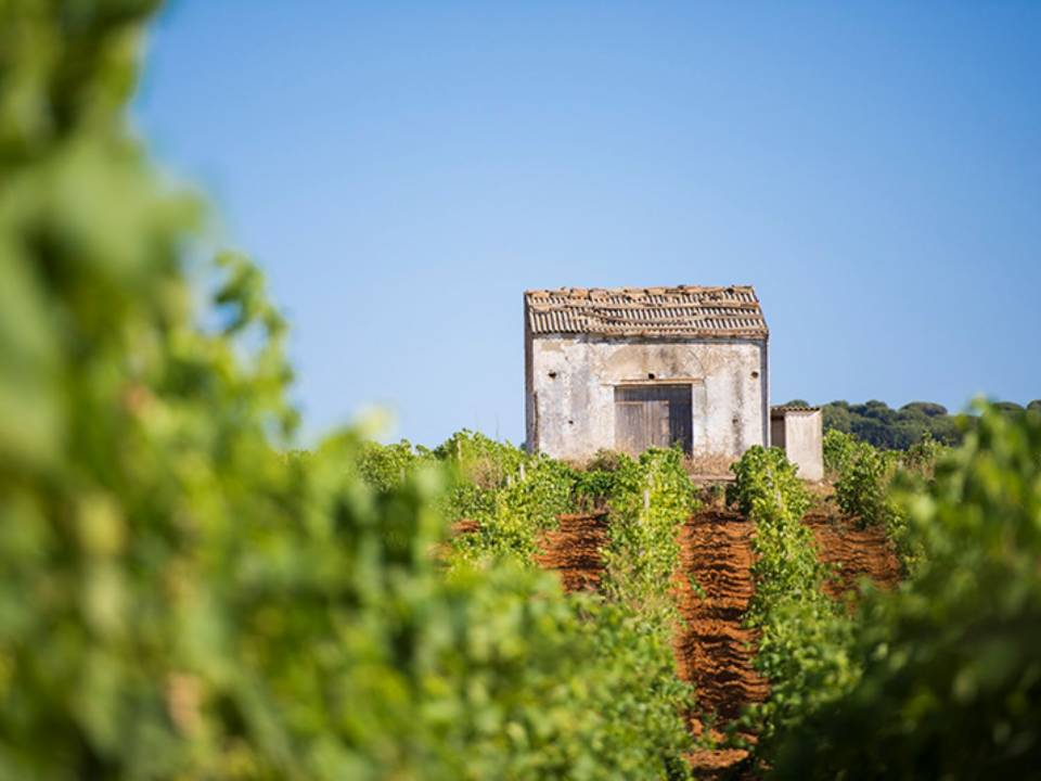 PICNIC ON THE LAWN AMONG WINES, TYPICAL PRODUCTS AND NATURE Tasting - Augustali Farm - AUGUSTALI Farm 2