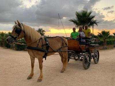 HORSE CARRIAGE TOUR WINE TASTING AND BRUNCH Tasting - Augustali Farm - AUGUSTALI Winery