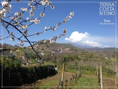 Visit to the cellar, wine tasting of 5 Etna DOC (including 2 Cru) and organic food. Tasting - Terra Costantino - Terra Costantino Winery