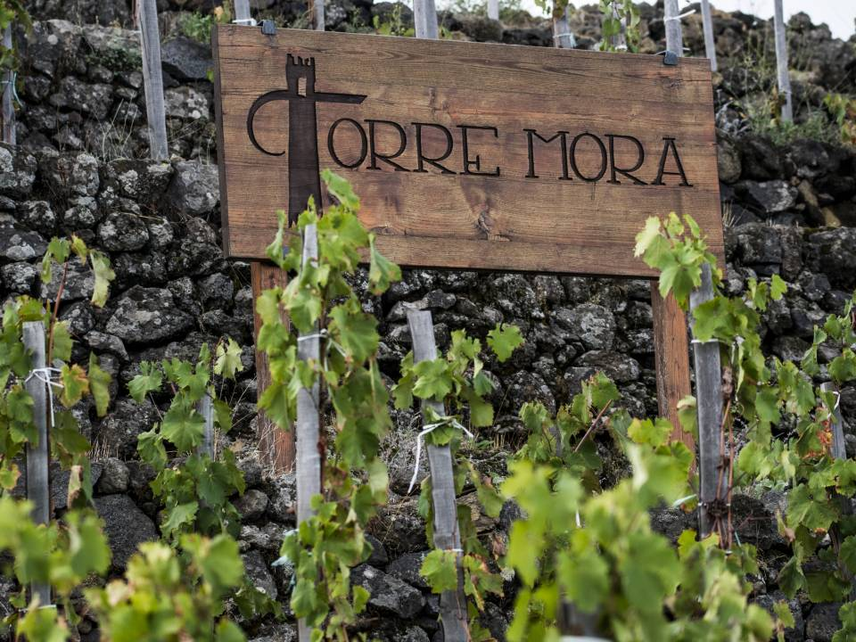 Torre Mora winery1