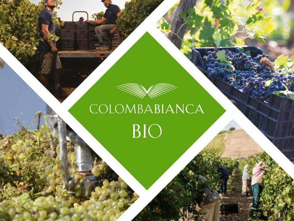 Cantine Colomba Bianca winery2