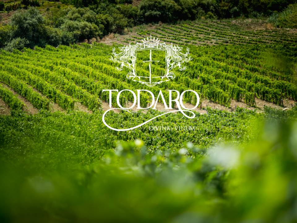 Winery Todaro - Todaro Winery winery4