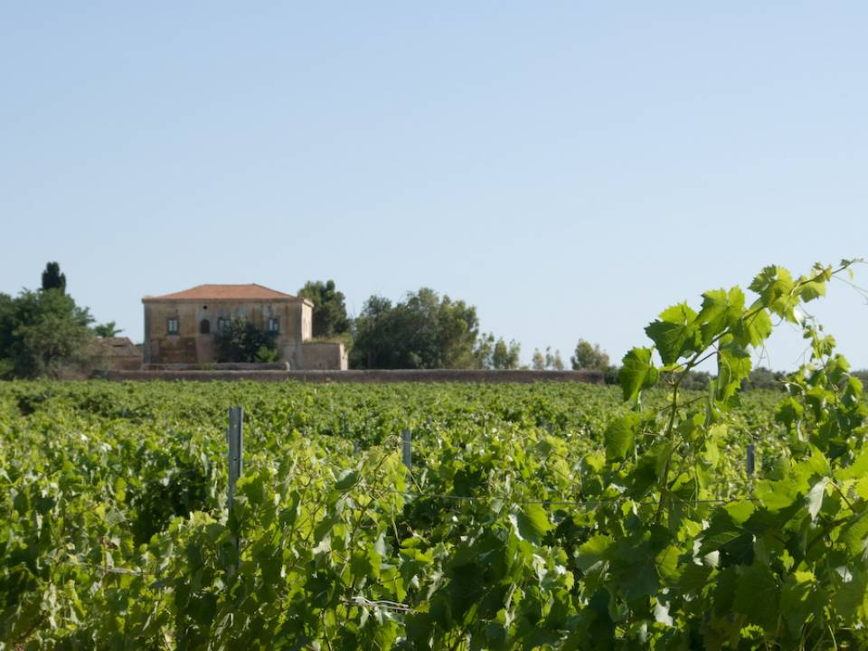 Avide Vineyards & Wineries winery1