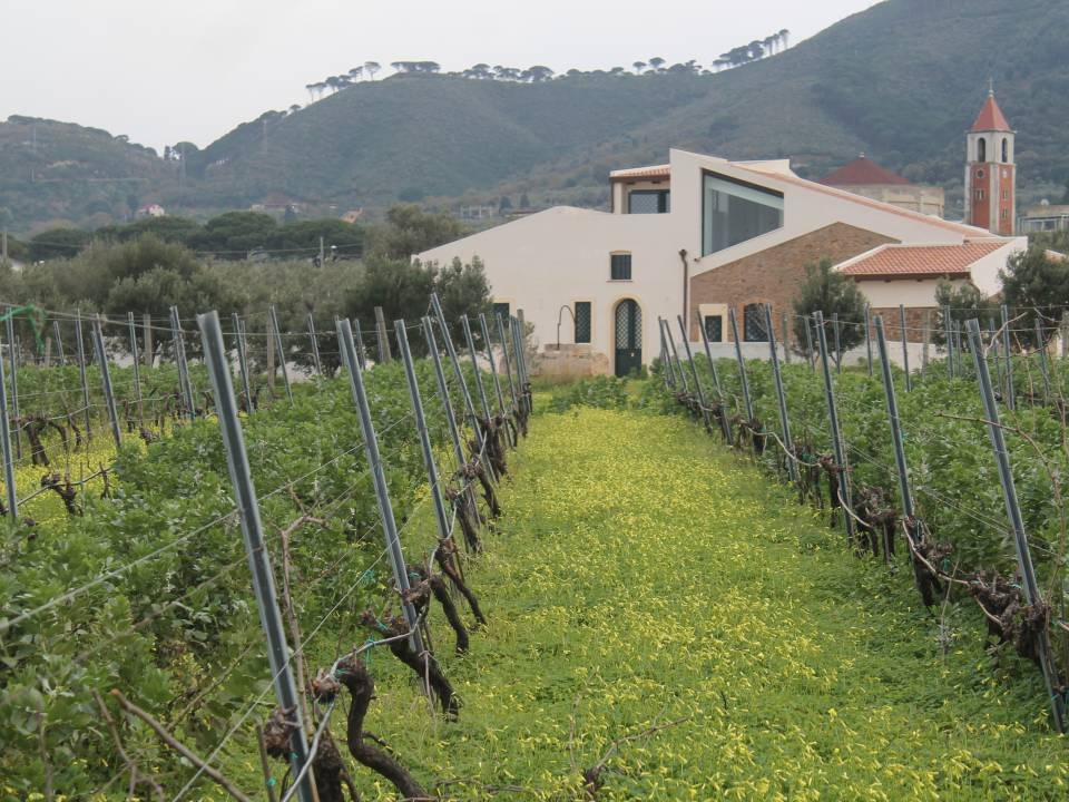 Francesco Giostra Reitano Winery farm12